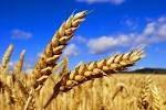 Страхование посевов